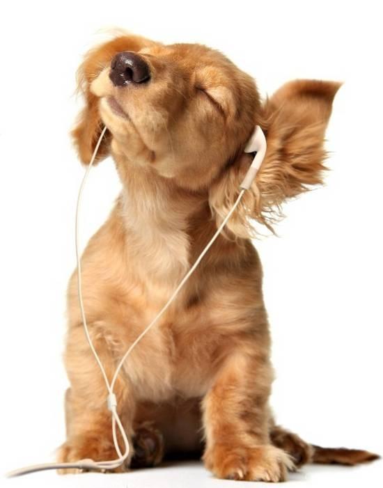 hond_en_muziek1